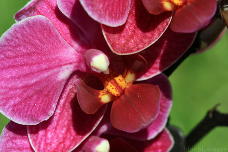 P_20100528_Orchid_03_sml