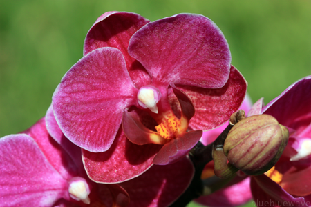 P_20100528_Orchid_04_sml