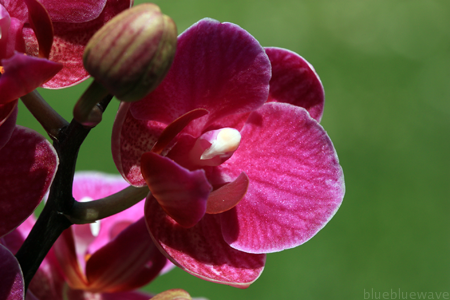 P_20100528_Orchid_07_sml